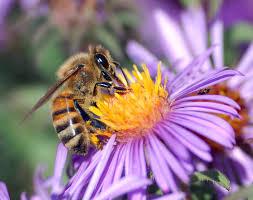 Attracting Backyard Pollinators